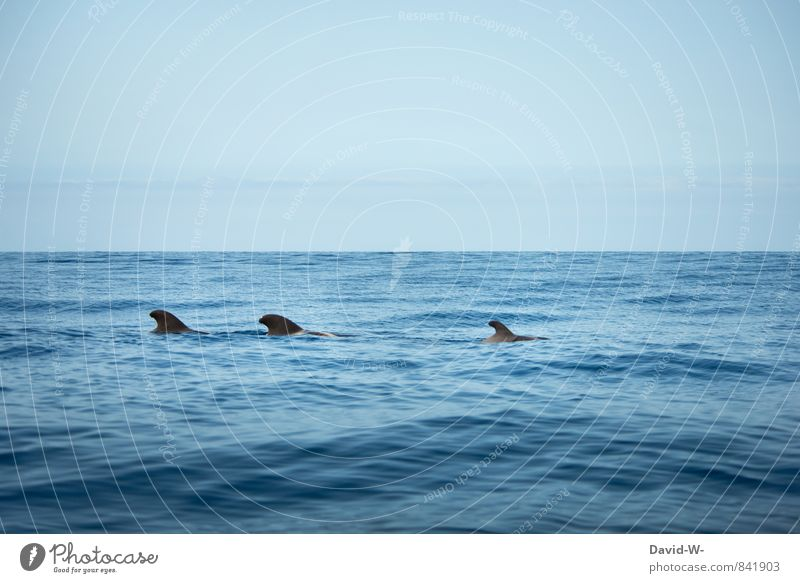 dolphin school Environment Nature Water Waves Coast Ocean Pacific Ocean Cruise Sailboat Animal Shark Dolphin Mammal 3 Group of animals Herd Flock Pack