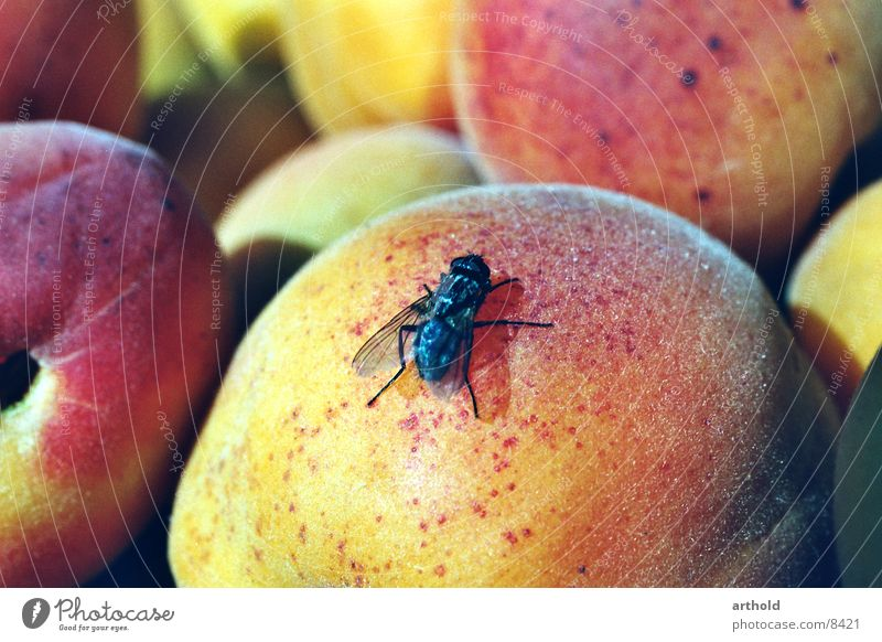Sweet landing Insect Nuisance Apricot Fruit basket Still Life Juicy Delicious Transport Flying apricots