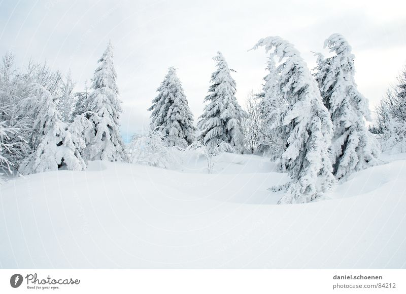 winter trees - winter dreams Tree Vacation & Travel Winter vacation Black Forest Deep snow Powder snow Fir tree Gray Mysterious White Unclear Skier Illuminating