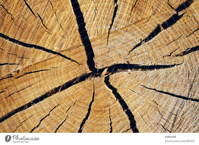 Tree cross section 2 Wood Tree trunk Crack & Rip & Tear Jump Furrow Cross-section Column