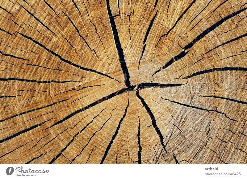 Tree cross section 1 Wood Tree trunk Crack & Rip & Tear Jump Furrow Cross-section Column