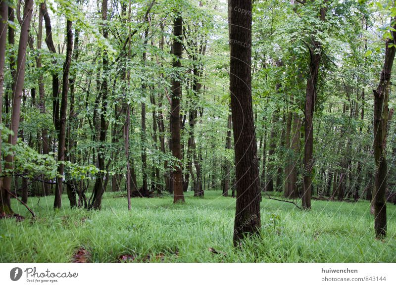 forest Nature Landscape Plant Spring Summer Tree Grass Forest Virgin forest Natural Brown Green Serene Calm Comfortable Colour photo Exterior shot Deserted Day
