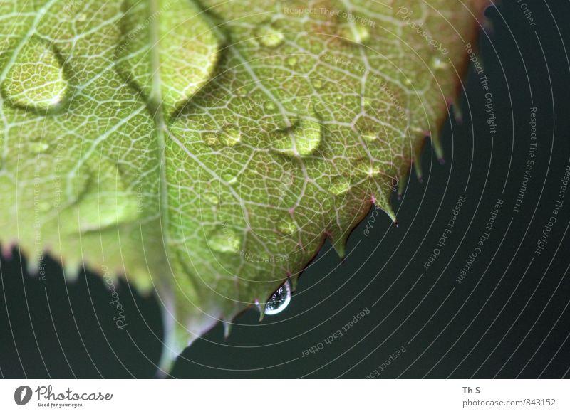 Nature Green Summer Leaf Black Spring Natural Rain Elegant Authentic Esthetic Wet Simple Blossoming Cool (slang) Drop