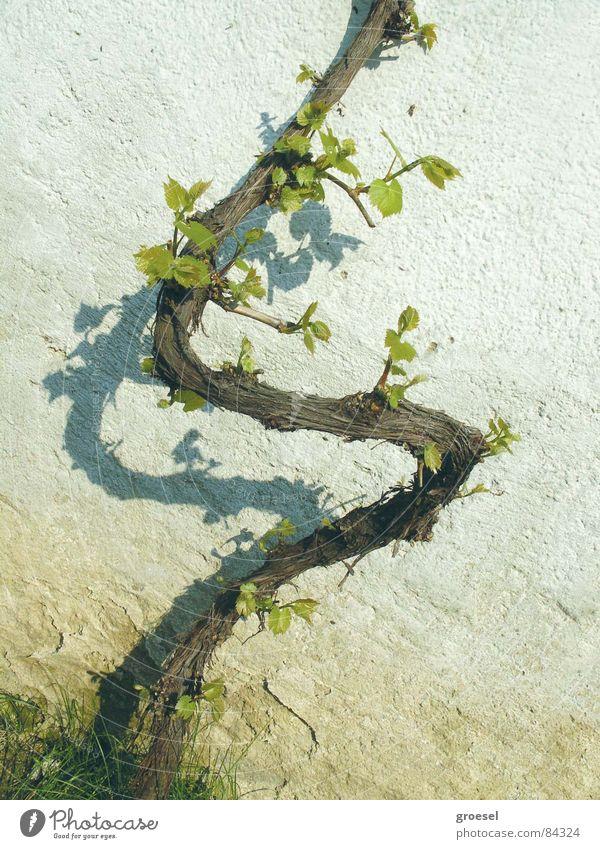 Spring Fresh Vine Sign Logo