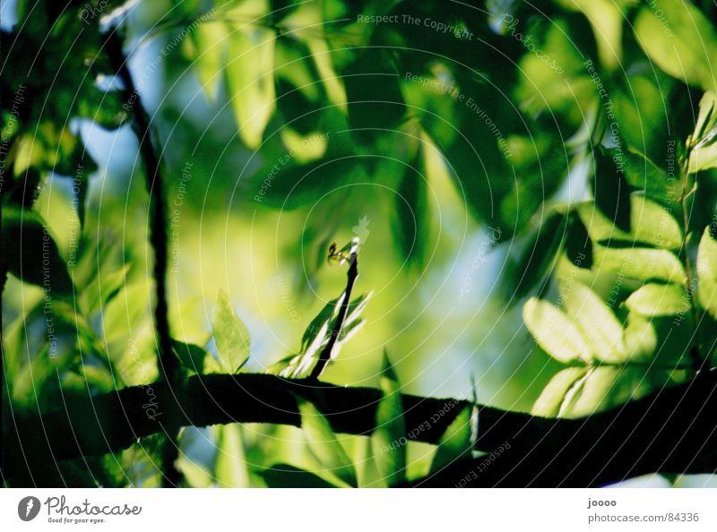 Tree Green Plant Leaf Branch Depth of field Twig Foliage plant