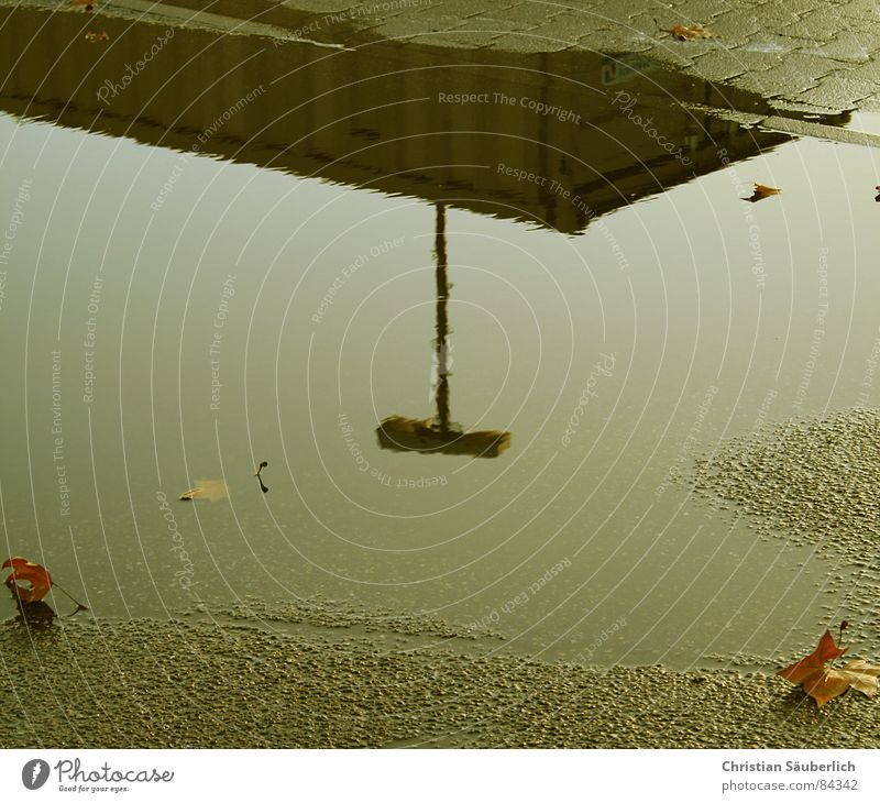 Water Leaf Mirror Traffic infrastructure Parking lot Puddle Mirror image Tar Water puddle