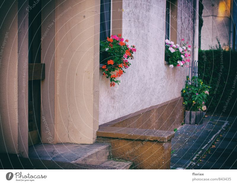 Plant Beautiful Red Flower House (Residential Structure) Dark Window Wall (building) Sadness Wall (barrier) Gray Brown Pink Flat (apartment) Growth