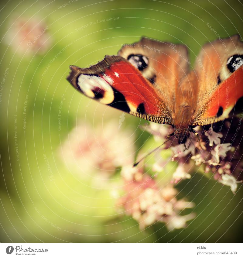 Happy somersault day Photocase Wild animal Butterfly Touch Fragrance Esthetic Elegant Spring fever Break Colour photo Exterior shot Close-up