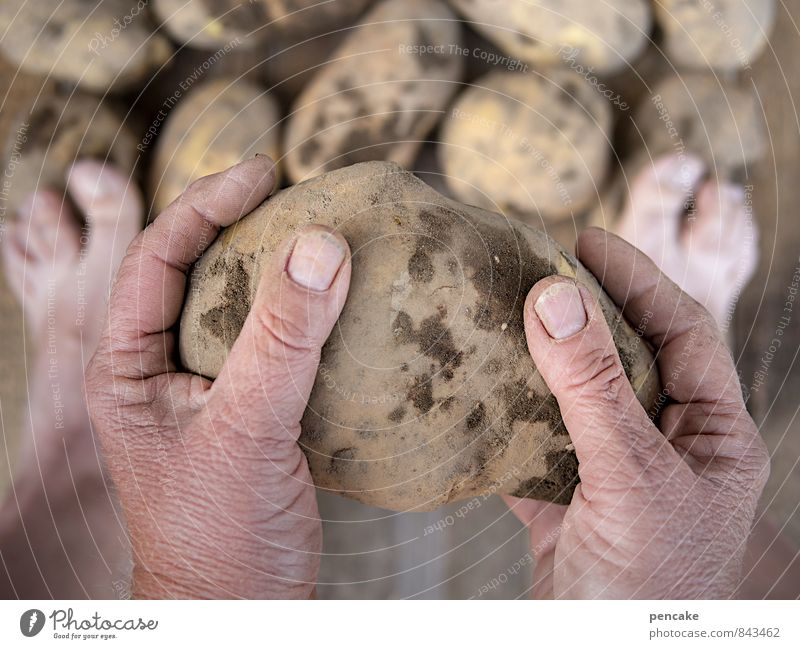 the stupidest farmers... Food Vegetable Hand Fingers Nature Elements Earth Summer Autumn Wood Sign Work and employment To hold on Serene Healthy Happy Life