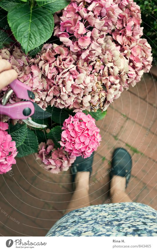 Gardener II Woman Adults 1 Human being Summer Plant Flower Skirt Footwear Work and employment Authentic Relaxation Contentment Hydrangea Gardening Legs Scissors
