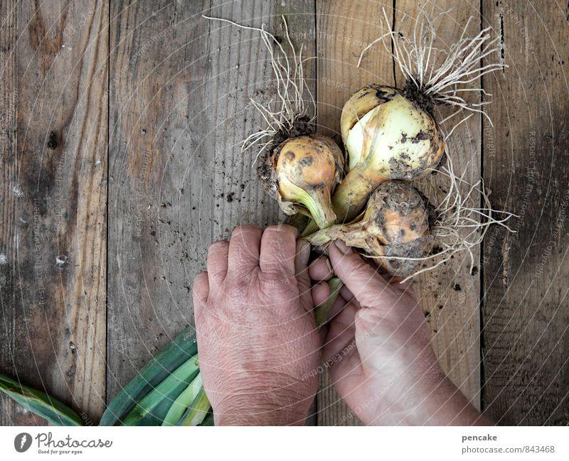 Nature Summer Hand Adults Autumn Happy Healthy Garden Work and employment Contentment 45 - 60 years Wait Joie de vivre (Vitality) Vegetable Serene Harvest