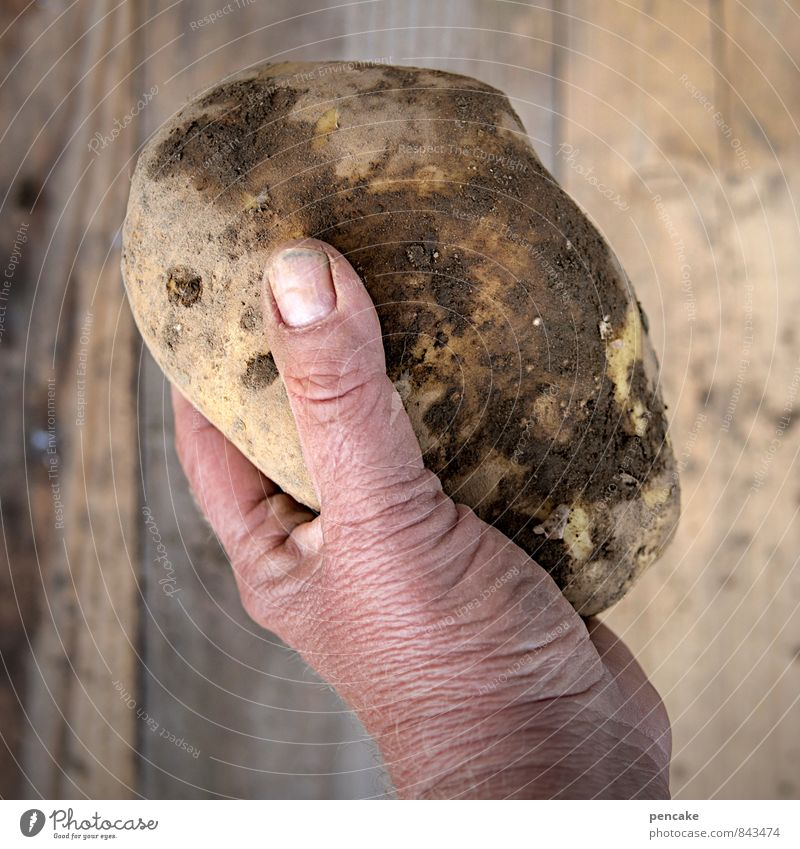...have the fattest potatoes! Food Vegetable Human being Hand Fingers 45 - 60 years Adults Nature Elements Earth Summer Autumn Sign Old Work and employment