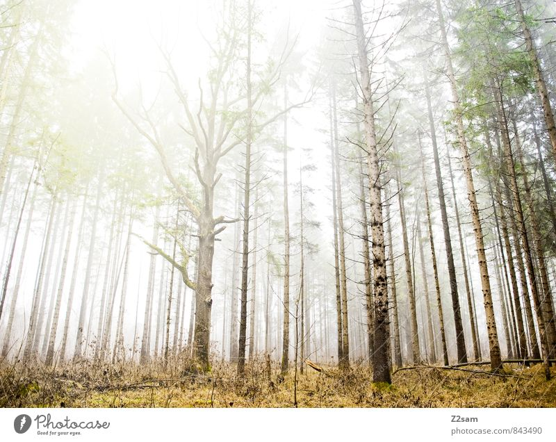 magic forest Environment Nature Landscape Sun Sunlight Autumn Climate Weather Beautiful weather Fog Tree Bushes Forest Fresh Gigantic Sustainability Natural