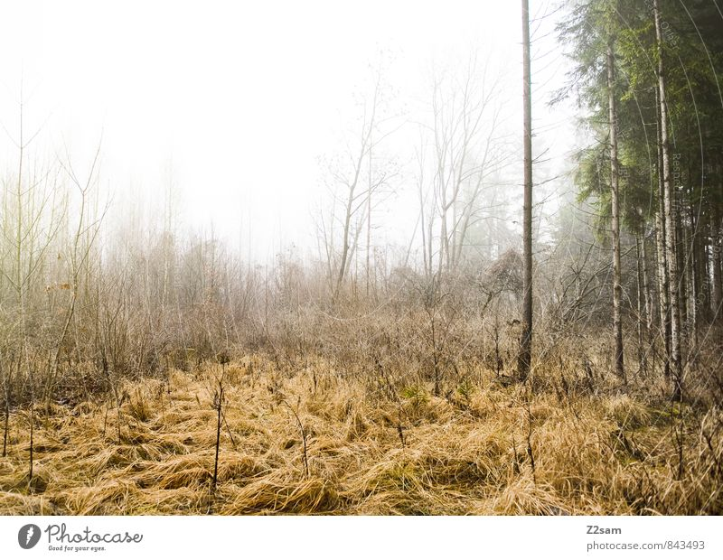 magic forest Environment Nature Landscape Autumn Bad weather Fog Plant Bushes Moss Forest Fresh Creepy Cold Sustainability Natural Gloomy Calm Dream Sadness