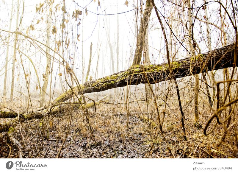 Nature Green Tree Loneliness Calm Landscape Leaf Winter Cold Environment Yellow Autumn Natural Moody Fog Idyll