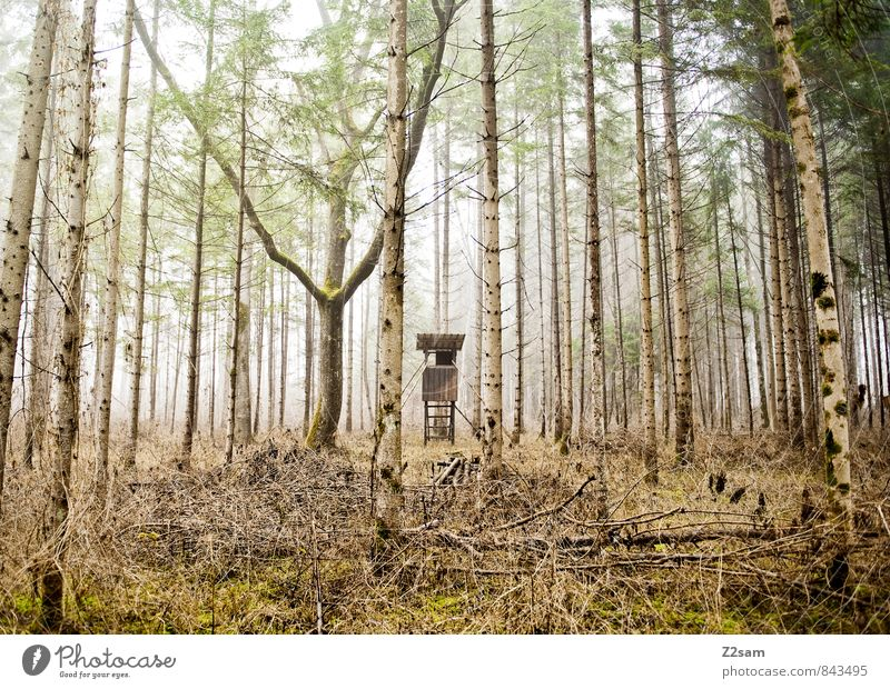 hunter's stall Environment Nature Landscape Autumn Climate Weather Fog Grass Bushes Forest Hunting Blind Far-off places Cold Sustainability Natural Yellow Green