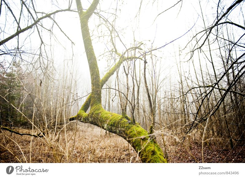 magic forest Environment Nature Landscape Autumn Winter Climate Bad weather Fog Tree Grass Bushes Moss Forest Happiness Cold Sustainability Natural Yellow Green