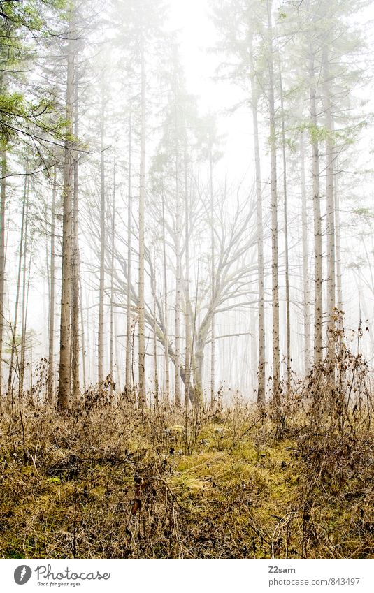 magic forest Environment Nature Landscape Autumn Bad weather Fog Tree Bushes Forest Fresh Cold Sustainability Natural Yellow Green Calm Dream Loneliness