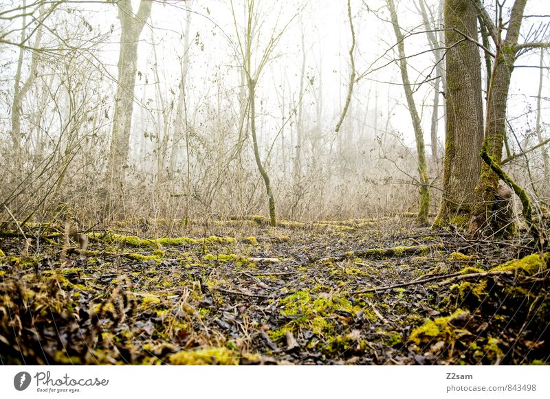 back to the woods Environment Nature Landscape Autumn Winter Bad weather Fog Tree Bushes Moss Forest Cold Sustainability Natural Brown Yellow Green Loneliness