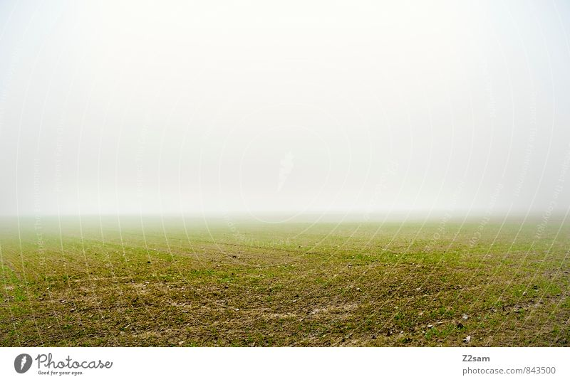 Nature Green Loneliness Calm Landscape Far-off places Dark Cold Environment Meadow Autumn Natural Gray Horizon Weather Field