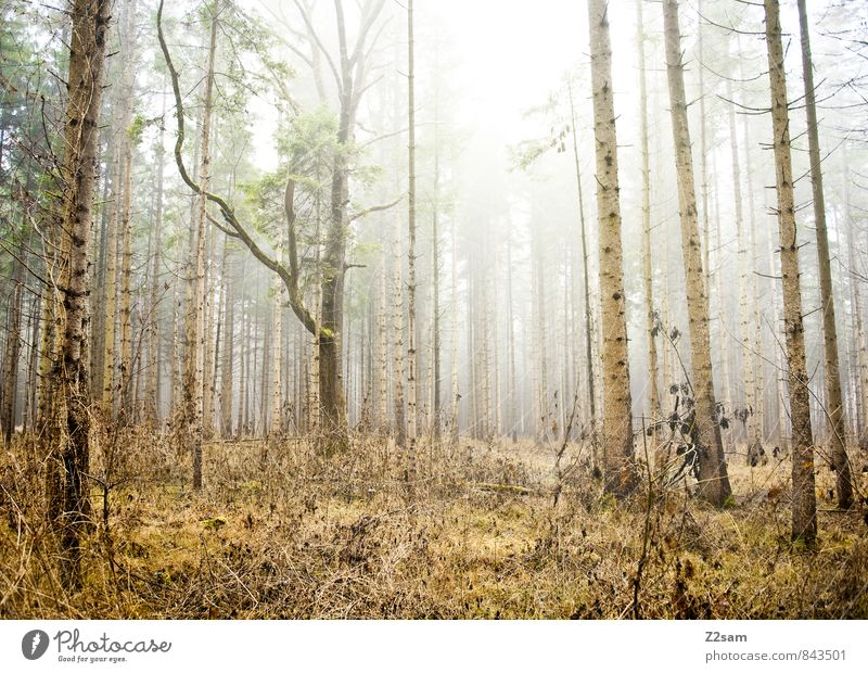 Nature Green Tree Loneliness Calm Landscape Winter Forest Cold Environment Yellow Autumn Natural Brown Fog Idyll