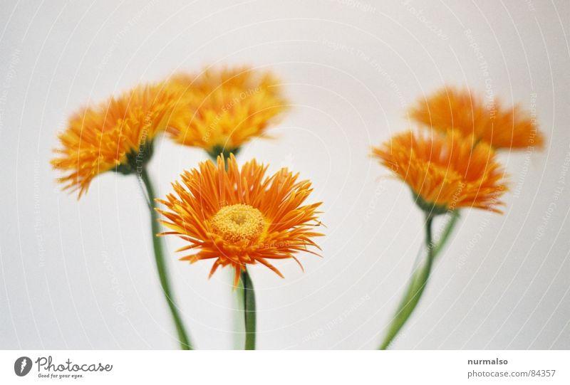 White Flower Art Orange 3 Circle Gloomy Soft Analog Bouquet Arts and crafts  Illuminating Similar Chat