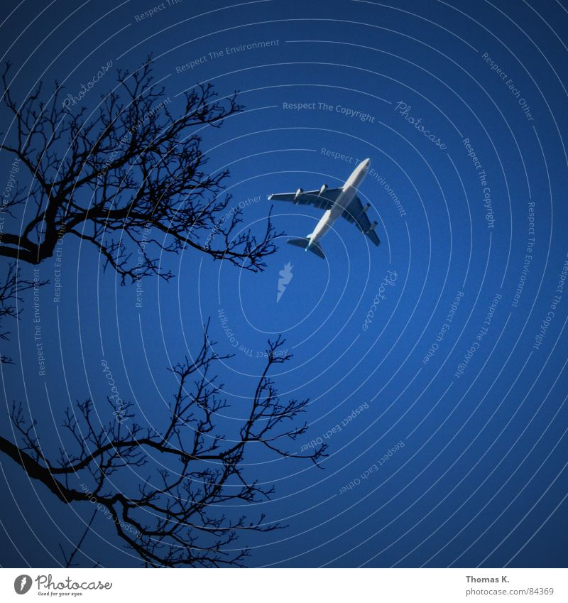 Sky Tree Winter Vacation & Travel Airplane Tall Aviation Branch Pain Wing Machinery Airplane landing Twig Pilot Jet Engines