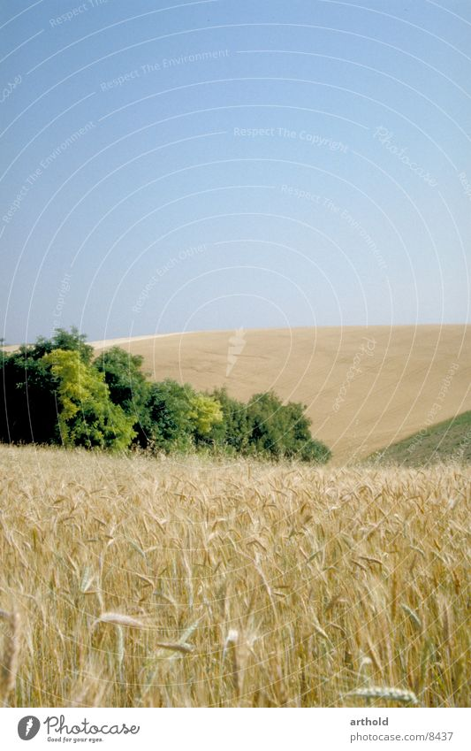 cereal fields Field Hill Federal State of Lower Austria Grain Cornfield granary hilly country Weinviertel Eastern Austria