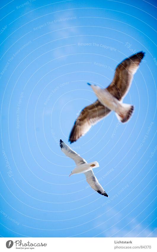 Sky White Ocean Blue Summer Beach Animal Movement Freedom Lake Dance Bird Coast Pair of animals Wind Weather