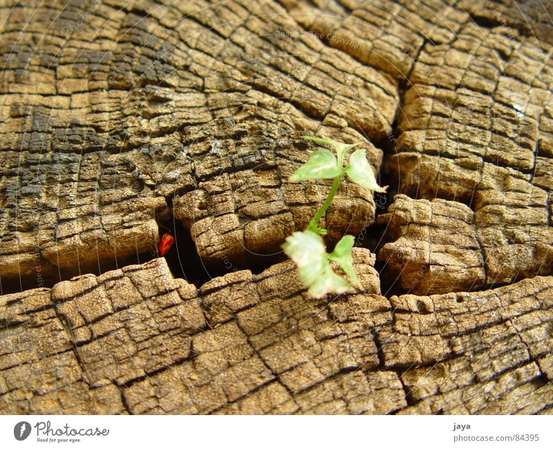 Nature Life Jump Brown Power Wood Bow Macro (Extreme close-up) Wood flour Sensitive