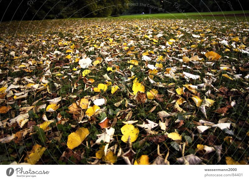 Leaf Autumn Meadow Lawn Obscure Decline Dreary Cover Downfall