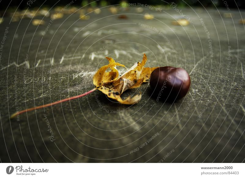 Leaf Autumn Change Derelict Obscure Still Life Chalk Chestnut tree Intersection Transform Variable