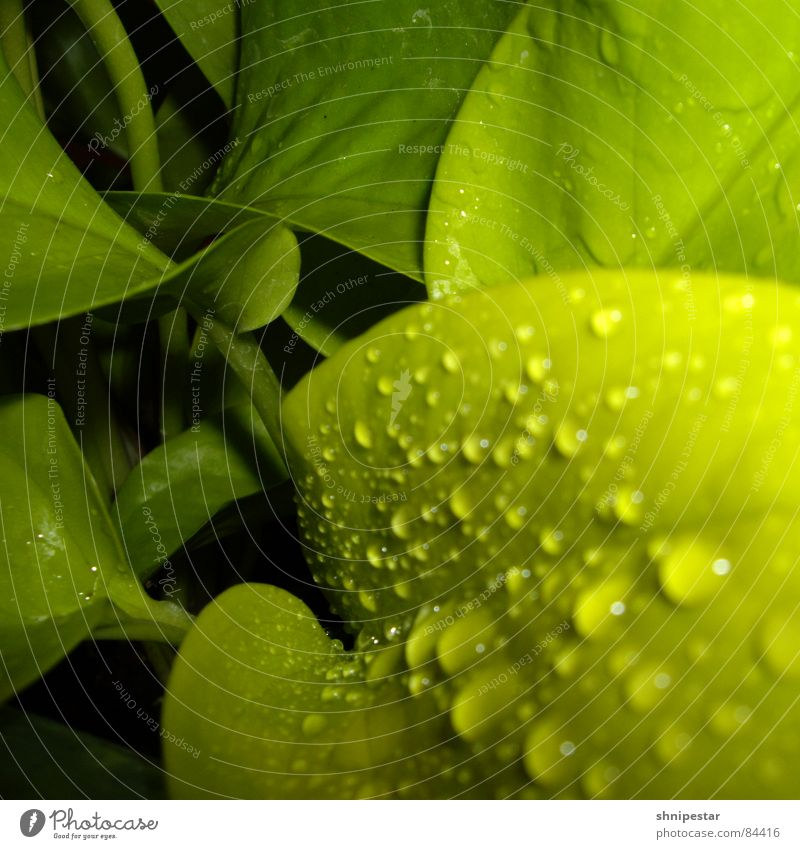 Green Dark Spring Power Force Near Drop Stalk Square Deep Aggression Poison Chemistry Artificial Immature Digital camera