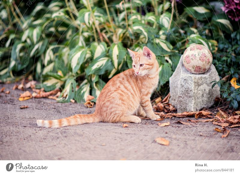Cats always go II Summer Plant Flower Garden Lanes & trails Pet 1 Animal Baby animal Cute Timidity Hosta Sphere Sandy path Colour photo Exterior shot Deserted