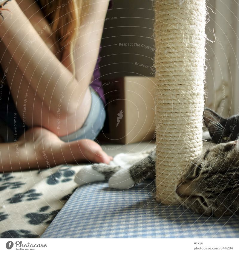 Chill Out Zone Girl Young woman Youth (Young adults) Infancy Life 1 Human being Pet Cat Animal face 2 Baby animal Relaxation Lie Sleep Cuddly Cute Emotions