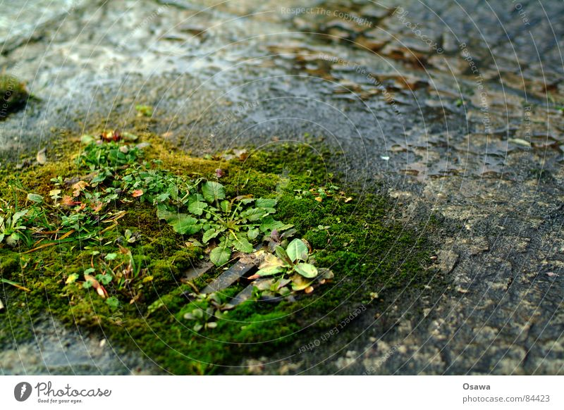 Nature Water Green Plant Grass Rain Wet Derelict Damp Pavement Brook Drainage Gully Curbstone Gravel bed