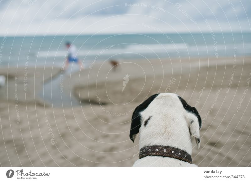 observation posts Vacation & Travel Tourism Far-off places Freedom Summer Summer vacation Sun Beach Ocean Animal Pet Dog beach dog 2 Observe Astute Neckband