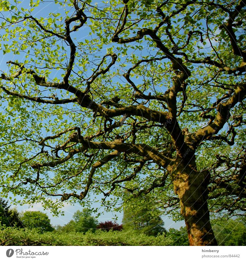 Nature Sky Tree Green Leaf Forest Spring Garden Landscape Branch Tree trunk Treetop Twig Horticulture Land Feature