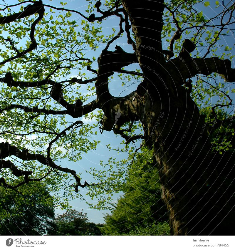 Nature Sky Tree Green Leaf Forest Spring Garden Park Landscape Branch Tree trunk Treetop Twig Horticulture Land Feature