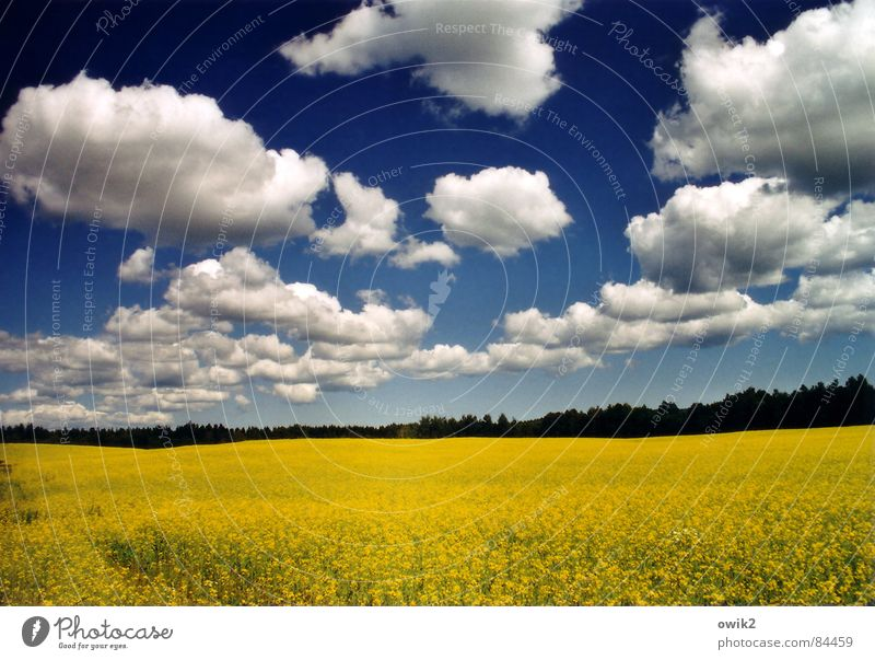 Nature Sky Blue Plant Summer Vacation & Travel Clouds Yellow Far-off places Freedom Landscape Field Environment Large Horizon Energy industry