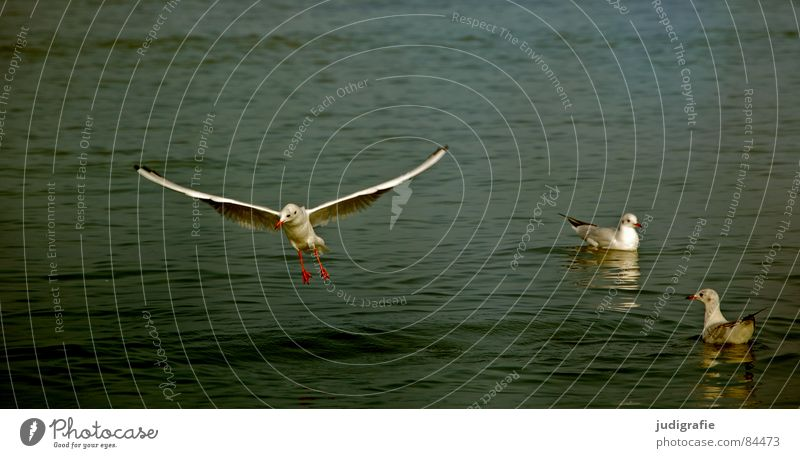 Water Ocean Animal Lake Bird Flying 3 Aviation Feather Wing Swimming & Bathing Airplane landing Baltic Sea Seagull Judder