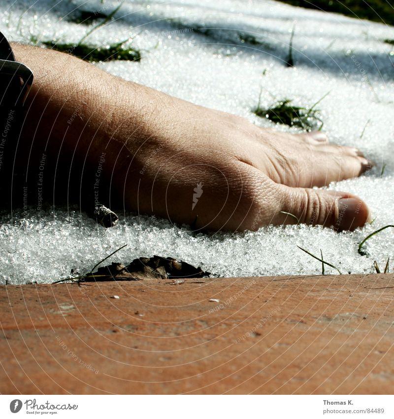 Nature Hand Winter Environment Grass Snow Fingers Grief Blade of grass Distress Climate change Thumb Carbon dioxide Melt Snow melt FCKW