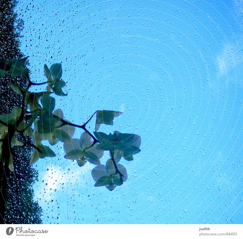 White Flower Green Clouds Window Spring Rain Glass Drops of water Window pane Orchid