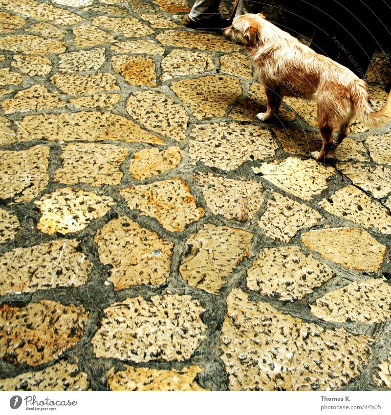 Rope Odor Stick Mammal Urinate Fix Loser Slippers Defecate Subordinate Obsequious Everywhere Submissive