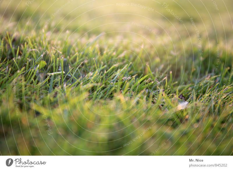 weed Environment Nature Landscape Plant Grass Moss Garden Park Meadow Yellow Green Sunbeam Mow the lawn Sporting grounds Grass surface Blade of grass Light