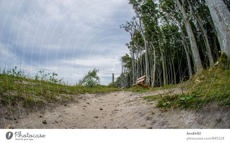 perimeter bank Landscape Sand Sky Clouds Summer Tree Forest Relaxation Colour photo Exterior shot Day Shallow depth of field Worm's-eye view Fisheye