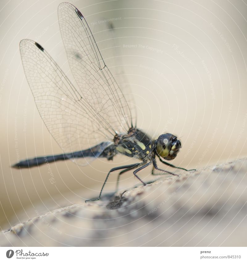 grand Environment Nature Animal Summer Beautiful weather Wild animal 1 Gray Green Dragonfly Insect Wing Colour photo Exterior shot Close-up