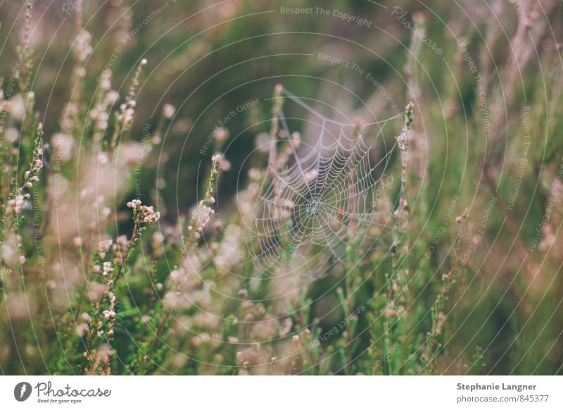spider webs Nature Landscape Plant Animal Grass Garden Meadow Field Spider Build Spider's web Grassland Colour photo Exterior shot Detail Deserted Morning Day