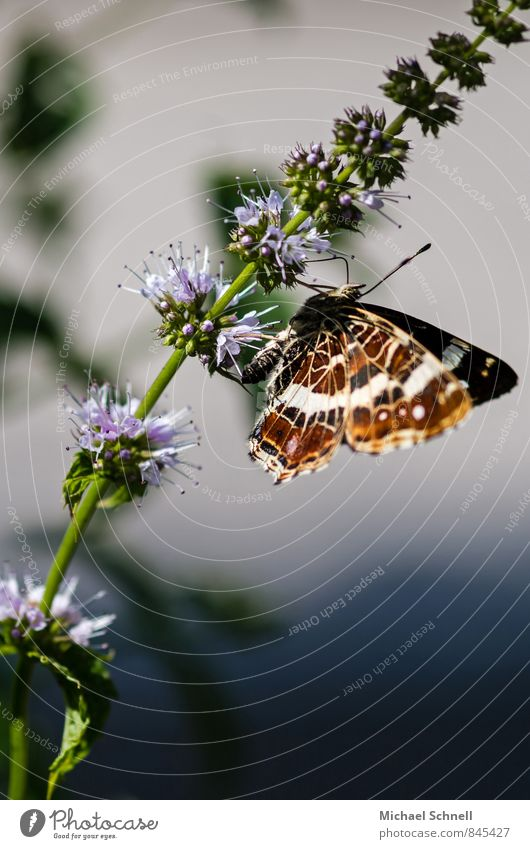 Beautiful Summer Animal Natural Happy Contentment Fresh Delicate Butterfly Fragile