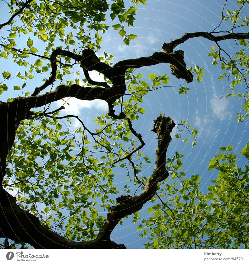 Nature Sky Tree Green Leaf Spring Garden Landscape Branch Tree trunk Treetop Twig Horticulture Land Feature